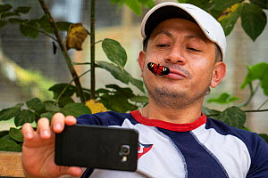 A man with a Heliconius butterfly on his face takes a selfie with his mobile phone, Mindo butterfly Farm (Mariposas de Mindo). Mindo, Ecuador.  -  Karine Aigner
