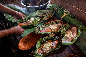 Local river fish traditionally prepared and steamed in banana tree leaves by the Anangu community. Napo Cultural Center Lodge, Yasuni National Park, Ecuador.  -  Karine Aigner