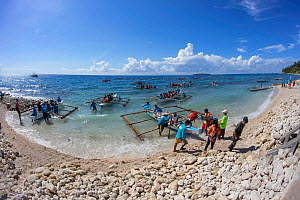 Tourists in local outrigger canoes to view Whale sharks, (Rhiniodon typus) offshore being fed at the surface, Oslob, Philippines.  -  David Fleetham