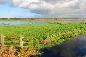 View of partially flooded pastureland on Tealham Moor, after a period of heavy rain, Somerset Levels, UK, December 2020.  -  Nick Upton