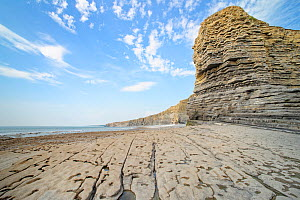 """'Sphinx Rock"""" cliff at Nash Point with layers of limestone and mudstone rocks and wave cut, fossil rich limestone pavement, Glamorgan Heritage Coast, South Wales, UK, August 2020.  -  Nick Upton"""