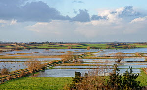 Overview of flooded pastureland on West Sedgemoor after a period of heavy rain, Somerset Levels, UK, December 2020.  -  Nick Upton