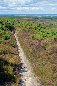 Footpath through Godlingston Heath with Poole Harbour in the background, Dorset, UK, August 2020.  -  Nick Upton