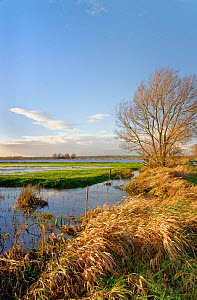 View of partially flooded pastureland on West Sedgemoor after a period of heavy rain, Somerset Levels, UK, December 2020.  -  Nick Upton