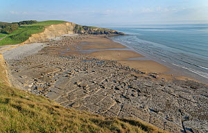 Overview of Southerndown Beach and Dunraven Bay with a wave cut limestone pavement exposed at low tide, Glamorgan Heritage Coast, South Wales, UK, August 2020.  -  Nick Upton