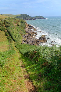 View north along the undulating South West Coast Path towards Drennick and Black Head, near Pentewan, South Cornwall, UK, August 2020.  -  Nick Upton