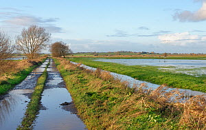 View of partially flooded pastureland and farm track on West Sedgemoor after a period of heavy rain, Somerset Levels, UK, December 2020.  -  Nick Upton