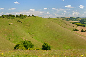Pewsey Downs and the Vale of Pewsey, viewed from Knap Hill in summer, near Devizes, Wiltshire, UK, July.  -  Nick Upton
