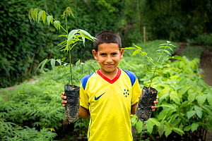 Child holding tree saplings during education program with FCAT (Fundacion para la Conservacion de los Andes Tropicales / Foundation for the Conservation of the tropical Andes) Mache chindul reserve, C...  -  Maxime Aliaga