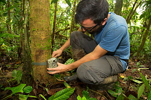 FCAT (Fundacion para la Conservacion de los Andes Tropicales / Foundation for the Conservation of the tropical Andes) researcher attaching  camera sensor to tree to monitor mammals in Mache chindul re...  -  Maxime Aliaga