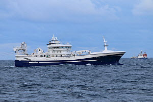 Fishing vessel 'Ocean Star' trawling for Herring on the North Sea. August 2020.  -  Philip  Stephen