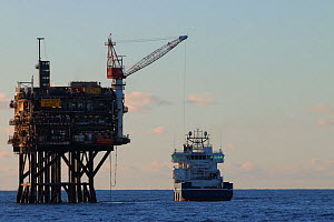 Supply vessel ' Rem Mistral' offloading cargo at 'Forties Echo', North Sea. August 2020.  -  Philip  Stephen