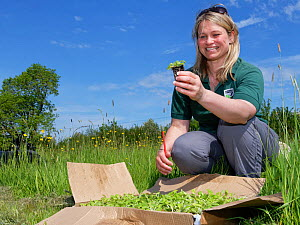Ellie Jones of Wiltshire Wildlife Trust briefing volunteers on how to plant Devil's bit scabious (Succisa pratensis) plant plugs in a formerly farmed meadow to provide food for caterpillars of the...  -  Nick Upton