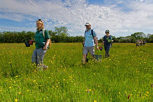 Ellie Jones of Wiltshire Wildlife Trust and a team of volunteers carrying trays and pots of Devil's bit scabious (Succisa pratensis) plant plugs for planting in a formerly farmed meadow to provide...  -  Nick Upton