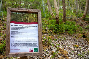 Ash dieback management sign, involving thinning out young stressed / diseased ash trees and replacing with other native species such as small-leaved lime and wych-elm. Lathkill Dale National Nature Re...  -  Alex Hyde