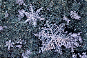 Close up of snowflakes surrounded by frost on a car window early in the morning. Peak District National Park, Derbyshire, UK. Febauary.  -  Alex Hyde