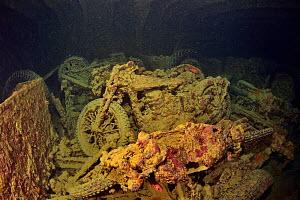 World War II British motorbikes (Norton 16H) stacked up on the back of truck in the hold of wreck of HMS Thistlegorm with soldierfish (Myripristis murdjan), Red Sea, Egypt.  -  Pascal Kobeh