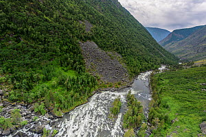 The Chulyshman River flows in the sparsely populated areas of Gorny Altai.Altai Republic, Russia  -  Olga Kamenskaya