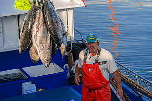 Artisanal and selective fishing for tuna. Albacore (Thunnus alalunga) locally called barrilote. Arrival at the Port of Los Cristianos, Tenerife. Sustainable fishing, Canary Islands. Atlantic Ocean, Ma...  -  Sergio Hanquet