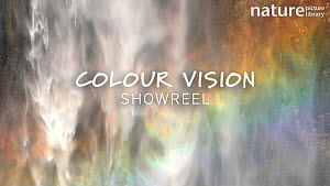 Our 'Colour Vision' showreel explores the vibrant range of colours to be found in the natural world, from burning red lava and vivid yellow flowers to lush green rainforests and the dark blue of the d...  -  NaturePL Showreels