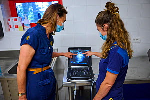 Delphine Delord, Marketing Manager, and Lucie Brisson veterinarian, looking at the ultrasound scan of Giant panda twins (Ailuropoda melanoleuca). Taken one week before the birth of the babies. Beauval...  -  Eric Baccega