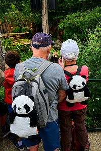 French tourists and panda fans watching Giant panda (Ailuropoda melanoleuca), with panda T-shirts, facemasks, caps and backpacks. Beauval ZooParc, Saint-Aignan, France. Model released. August 2021. Ed...  -  Eric Baccega