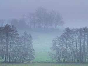 Trees and fields in mist, Thierache, north of France, December 2020.  -  Pascal  Tordeux