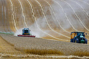 Tractor and combine harvester harvesting wheat crop, Aisne, Picardy, France. Small repro only.  -  Pascal  Tordeux