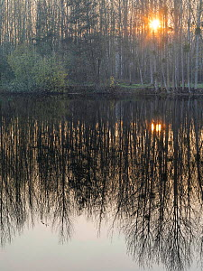 Setting sun through trees reflected in pond, Vendeuil, Picardy, France, December 2020.  -  Pascal  Tordeux