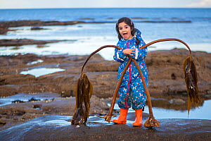 RF - Young girl rockpooling, playing with seaweeds washed up by storms, here with (Laminaria hyperborea) plants. Seahouses, Northumberland, England, United Kingdom. British Isles. North Sea. Model rel...  -  Alex Mustard
