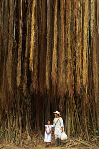 Mother and child beneath a giant fig tree in the Quebrada Valencia, Magdalena, Colombia  -  David Noton