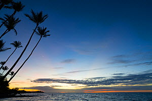 Post-sunset glow at Anaeho'omalu Bay with silhouetted palm trees, South Kohala, Hawaii. October, 2020.  -  Doug Perrine