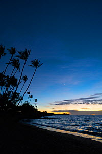 Sunset after-glow at Anaeho'omalu Bay with silhouetted palm trees, South Kohala, Hawaii. October, 2020.  -  Doug Perrine