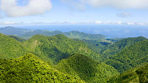 Aerial shot panning from view of freshwater lake to surrounding tropical forest canopy, Dominica, West Indies, 2019.  -  Derek Galon