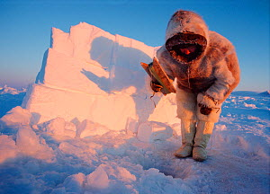 Inuit hunter Hans Jensen in traditional winter fur clothing jigging for polar cod through a hole in the sea ice. Inglefield Bay. Northwest Greenland. (1998)  -  Bryan and Cherry Alexander