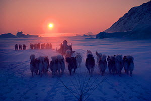 Inuit hunters travelling by dog sleds at sunset during a long polar bear hunt, Cape York. Northwest Greenland.  -  Bryan and Cherry Alexander