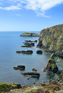 Lighthouse in distance at South Stack, Anglesey, North Wales.  -  Mike Potts