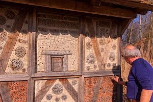 Large insect hotel being cleaned and put back in place, Alsace, France.  -  Sylvain Cordier