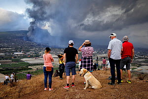 Residents of the Aridane valley watching eruption of Cumbre Vieja volcano near their homes, La Palma, Canary Islands, September 2021.  -  Oriol  Alamany