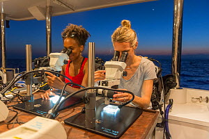 Scientists Nadine Boulotte from Southern Cross University(left) and Katie Chartrand from James Cook University (right) looking down microscopes at Coral larvae. Part of Coral IVF project to rear coral...  -  Juergen Freund