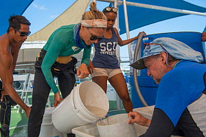 Scientists and researchers from the Coral IVF project led by Southern Cross University. Katie Chartrand (James Cook University) pours 5 day old coral larvae into a sieve held by Prof. Peter Harrison (...  -  Juergen Freund