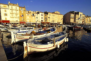 A line of boats moored in the sunny harbour of St Tropez, France.  -  Onne van der Wal