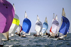 505 dinghies racing at the World Championships in Hayannis, Massachusetts, USA  -  Onne van der Wal
