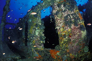 """Bowfield wreck, formerly called """"Relitto del Faro"""" (the lighthouse wreck), Messina, Italy.  -  Roberto Rinaldi"""