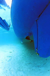 Underwater view of a yacht's hull in turquoise water, Belize. - Onne van der Wal