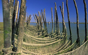 "Nets (seraie) used on some of the islands in the Venetian lagoon. Venice, Italy. ^^^These islands are called �barene"", during certain periods when the tides are extremely high they are submerged.  -  Roberto Rinaldi"