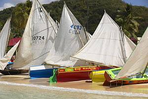 Work boats pulled up on beach during the Grenada Sailing Festival held on the Grande Anse beach near St.Georges, Grenada, Caribbean 2003.  -  Onne van der Wal