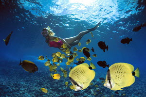Two endemic Lemon / Milletseed butterflyfish (Chaetodon miliaris), with woman snorkeling and miscellaneous reef fish behind, Hawaii. Digital composite. - David Fleetham