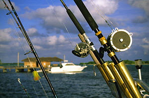 Fishing rods with boat behind, Little Cayman, Cayman Islands.  -  Roberto Rinaldi