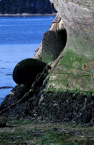 Rudder and keel of a wrecked fishing boat covered in seaweed, Rostellec, Finistere, Brittany, France. May 2000 - Lenaïc Gravis and Jocelyn Blériot